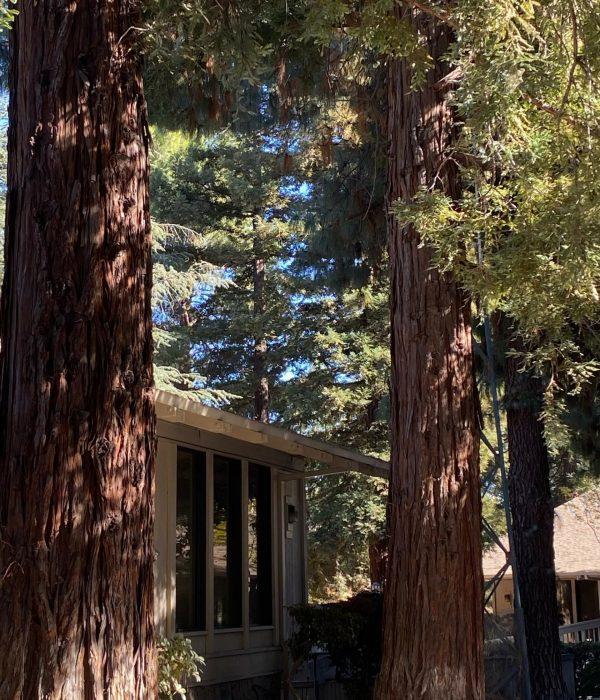 Anne Shideler exterior windo in trees